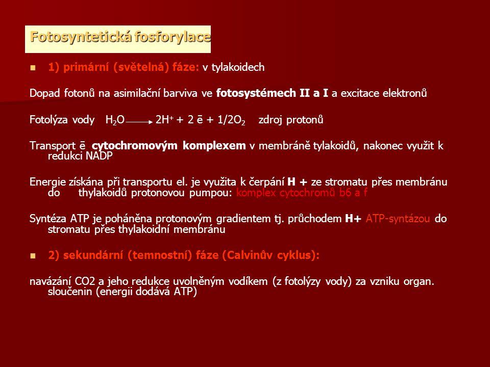 Fotosyntetická fosforylace