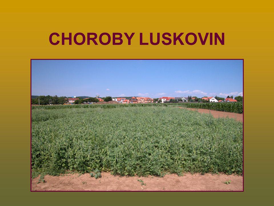 CHOROBY LUSKOVIN