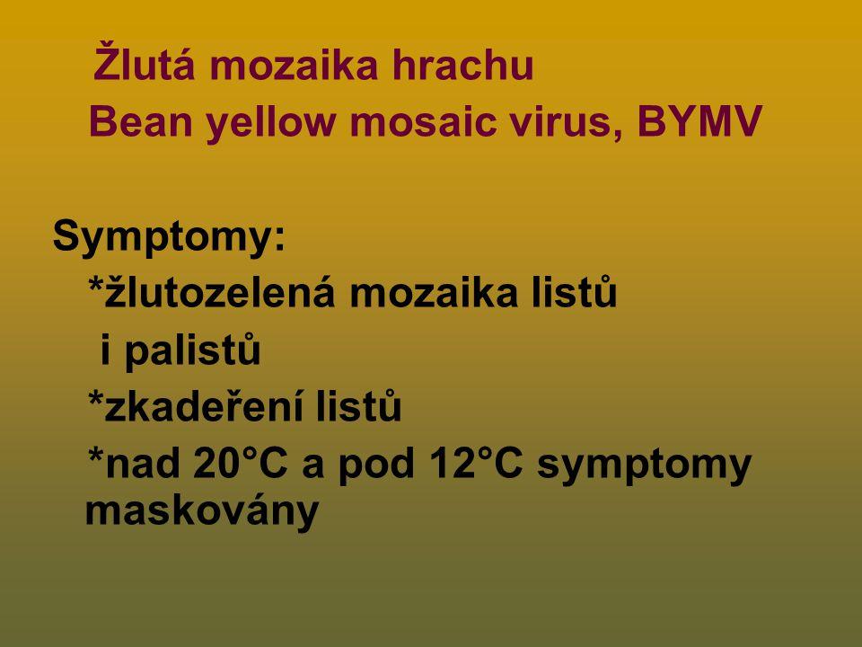 Bean yellow mosaic virus, BYMV Symptomy: *žlutozelená mozaika listů