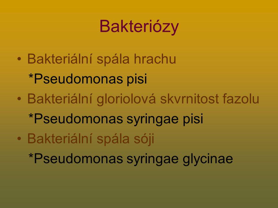 Bakteriózy Bakteriální spála hrachu *Pseudomonas pisi