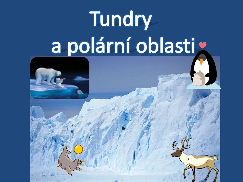 Tundry a polární oblasti