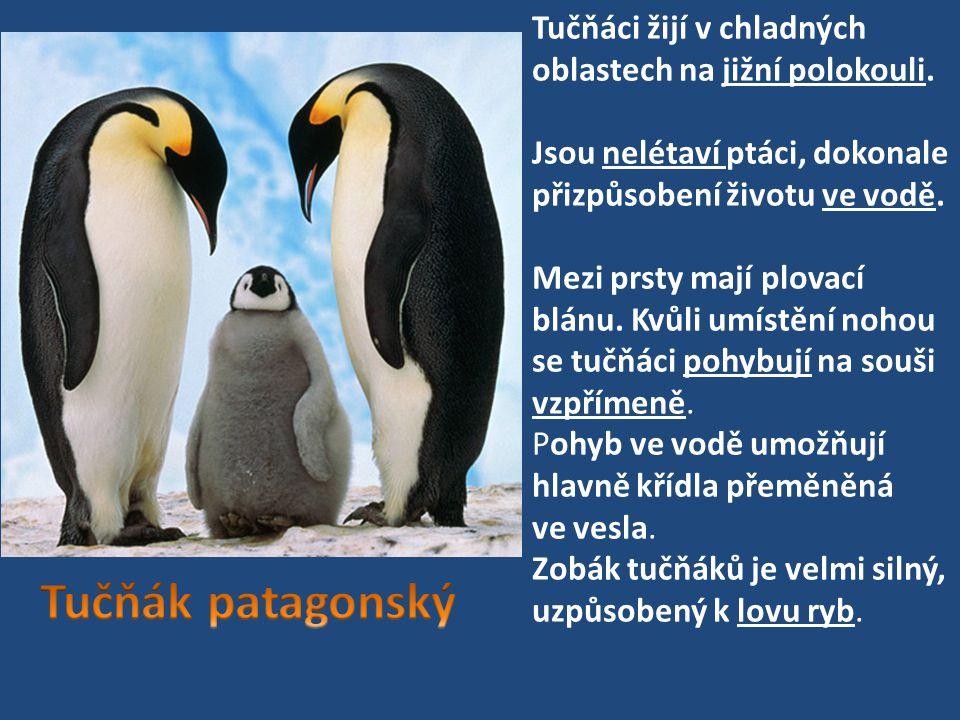 Tučňáci žijí v chladných oblastech na jižní polokouli.
