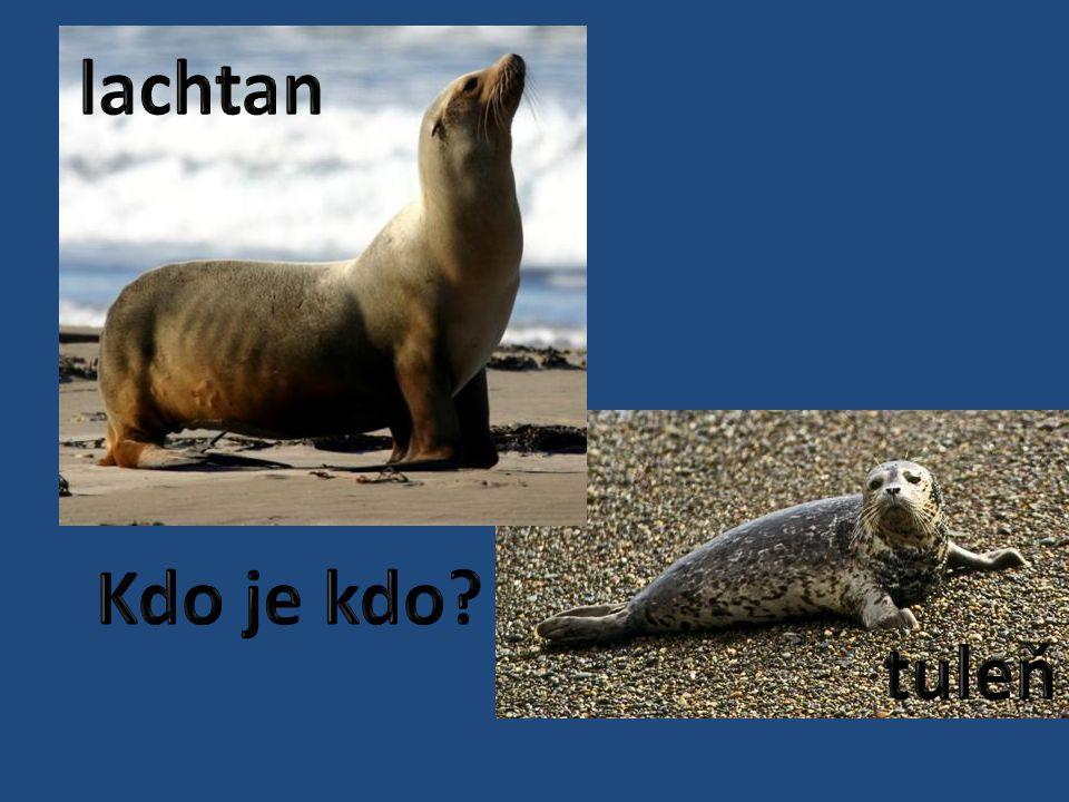 lachtan Kdo je kdo tuleň