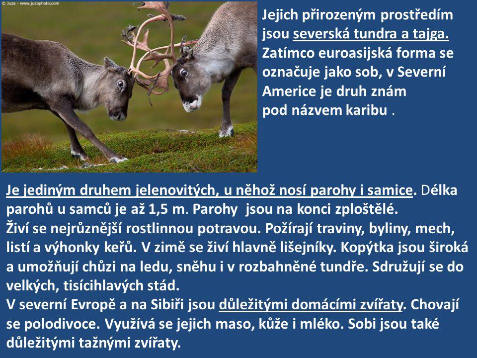 Jejich přirozeným prostředím jsou severská tundra a tajga