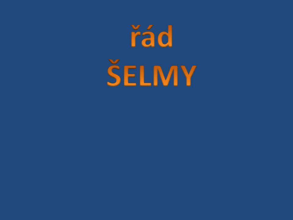 řád ŠELMY