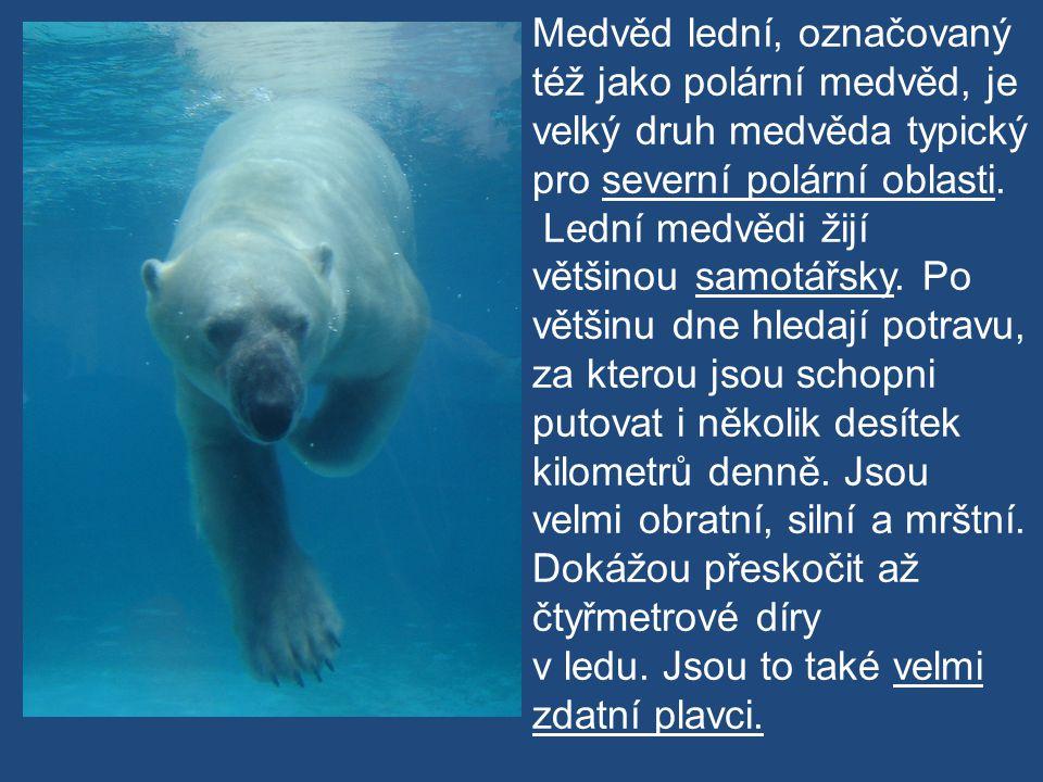 Medvěd lední, označovaný též jako polární medvěd, je velký druh medvěda typický pro severní polární oblasti.