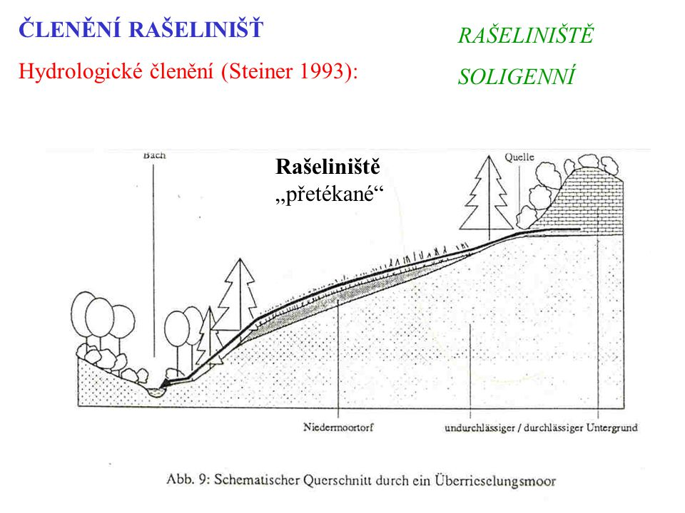 ČLENĚNÍ RAŠELINIŠŤ Hydrologické členění (Steiner 1993): RAŠELINIŠTĚ.