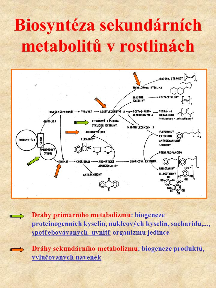 Biosyntéza sekundárních metabolitů v rostlinách