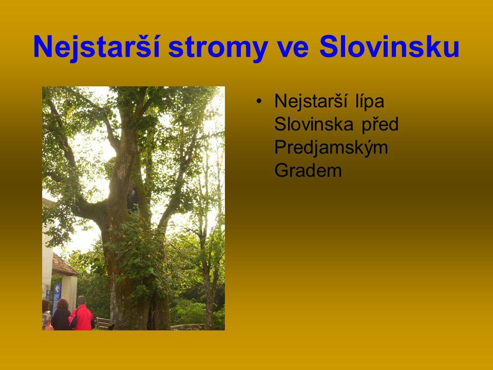 Nejstarší stromy ve Slovinsku