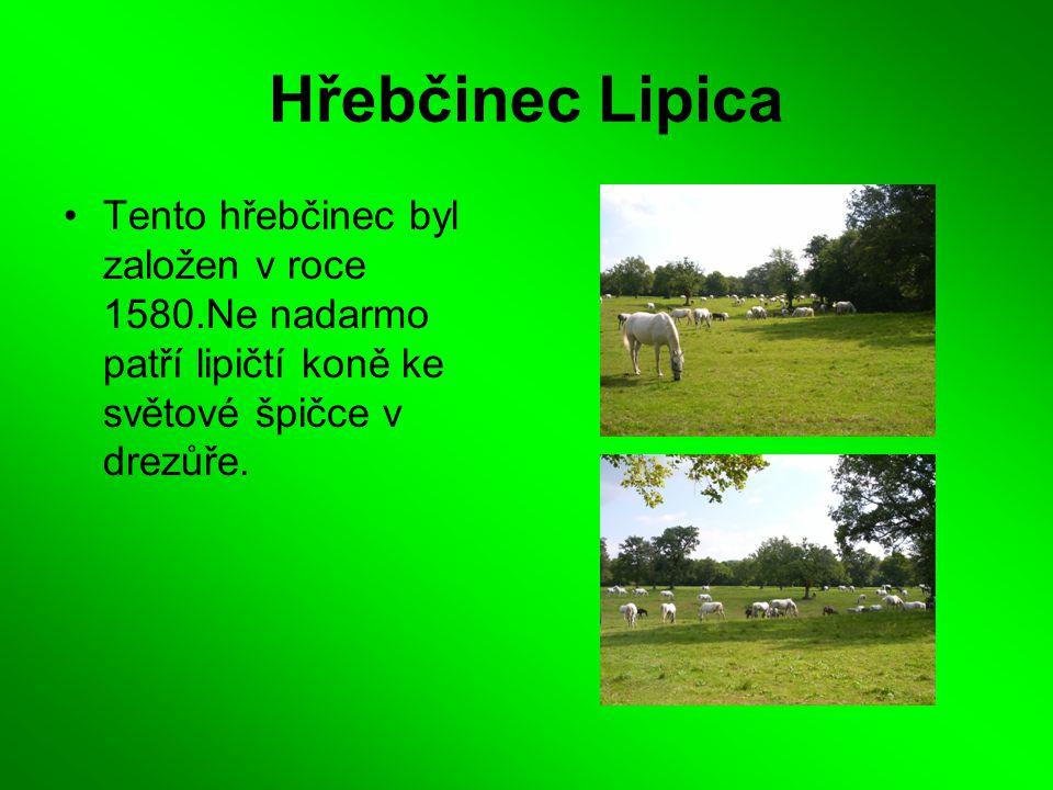 Hřebčinec Lipica Tento hřebčinec byl založen v roce 1580.Ne nadarmo patří lipičtí koně ke světové špičce v drezůře.