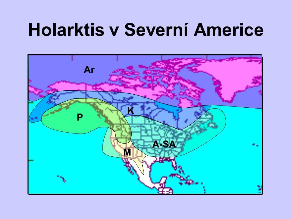Holarktis v Severní Americe