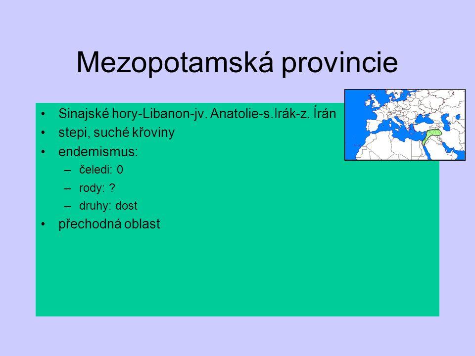 Mezopotamská provincie