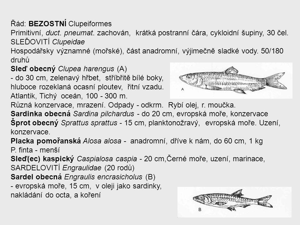 Řád: BEZOSTNÍ Clupeiformes