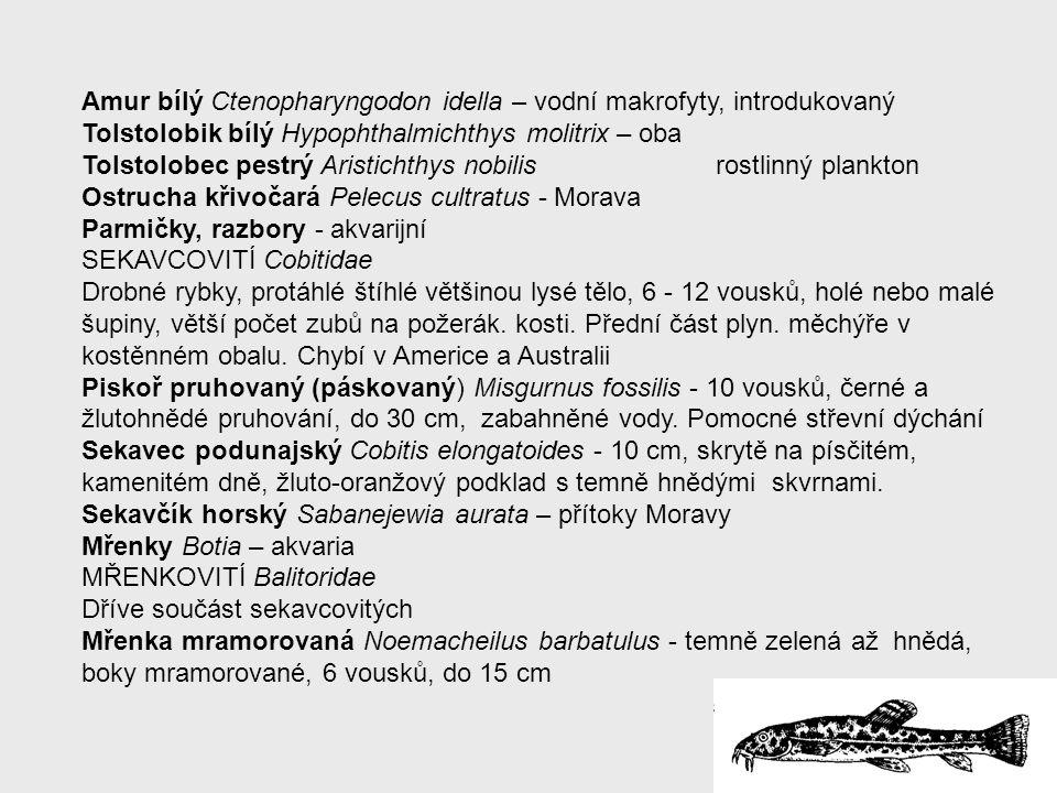 Amur bílý Ctenopharyngodon idella – vodní makrofyty, introdukovaný
