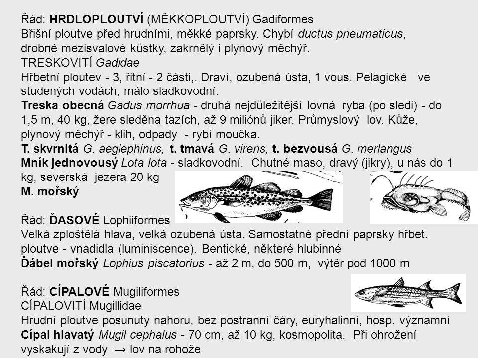 Řád: HRDLOPLOUTVÍ (MĚKKOPLOUTVÍ) Gadiformes