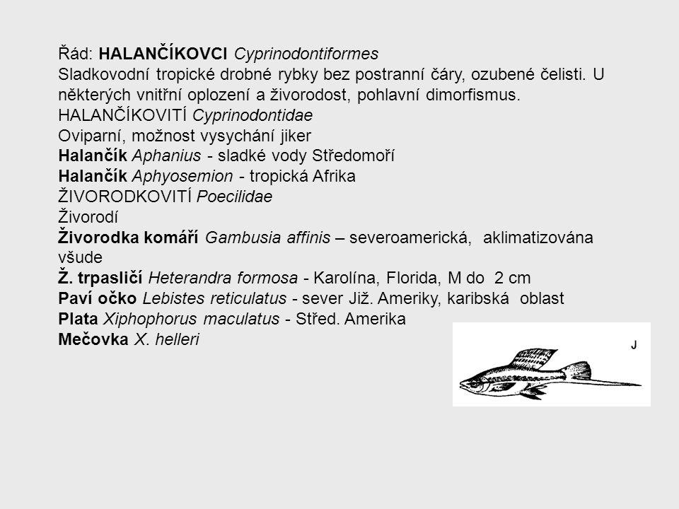 Řád: HALANČÍKOVCI Cyprinodontiformes