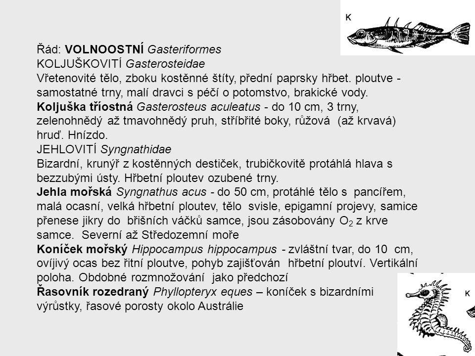 Řád: VOLNOOSTNÍ Gasteriformes