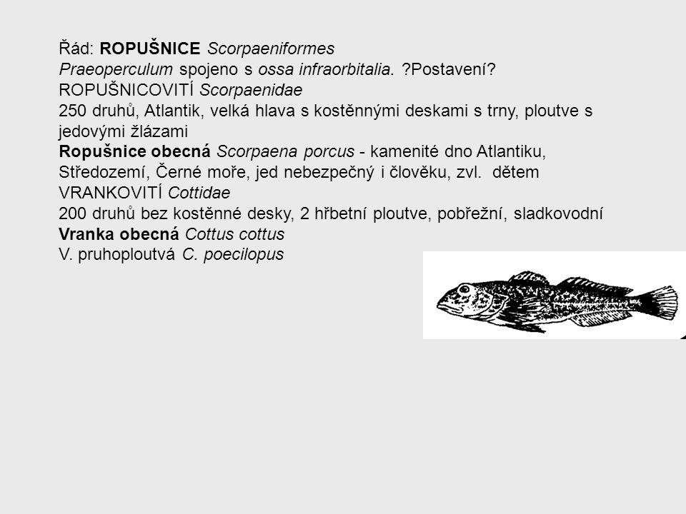 Řád: ROPUŠNICE Scorpaeniformes