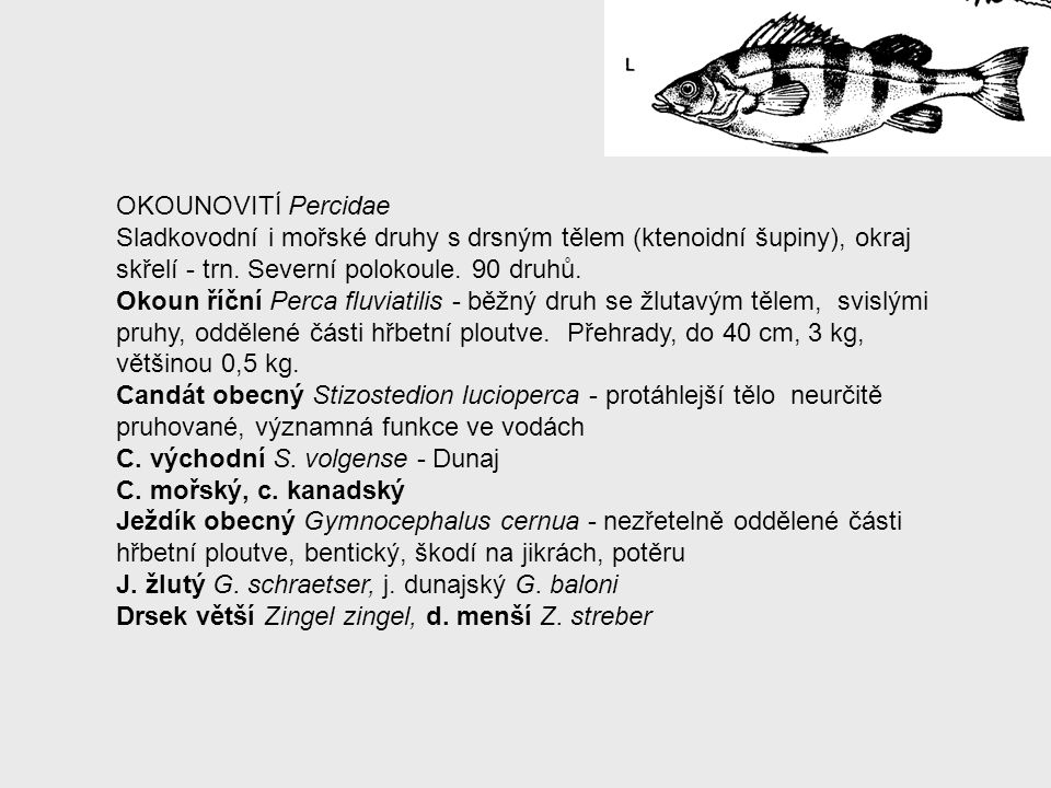 OKOUNOVITÍ Percidae Sladkovodní i mořské druhy s drsným tělem (ktenoidní šupiny), okraj skřelí - trn. Severní polokoule. 90 druhů.