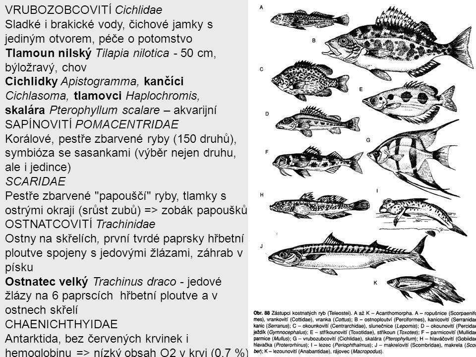 VRUBOZOBCOVITÍ Cichlidae