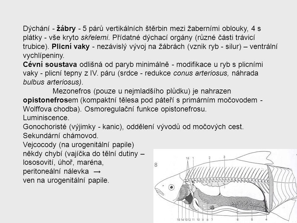 Dýchání - žábry - 5 párů vertikálních štěrbin mezi žaberními oblouky, 4 s plátky - vše kryto skřelemi. Přídatné dýchací orgány (různé části trávicí trubice). Plicní vaky - nezávislý vývoj na žábrách (vznik ryb - silur) – ventrální vychlípeniny.