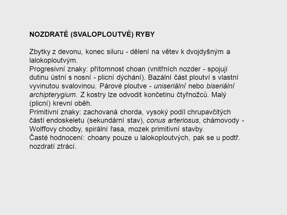 NOZDRATÉ (SVALOPLOUTVÉ) RYBY