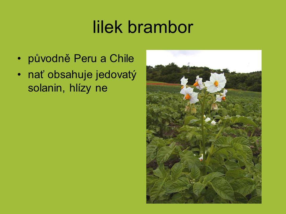 lilek brambor původně Peru a Chile