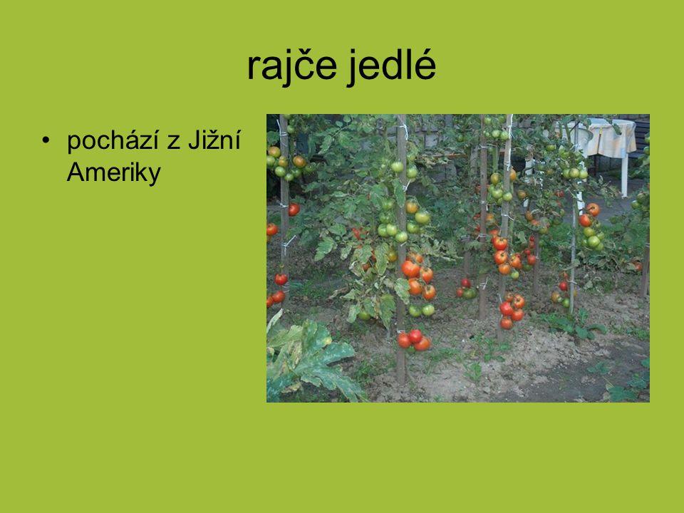 rajče jedlé pochází z Jižní Ameriky