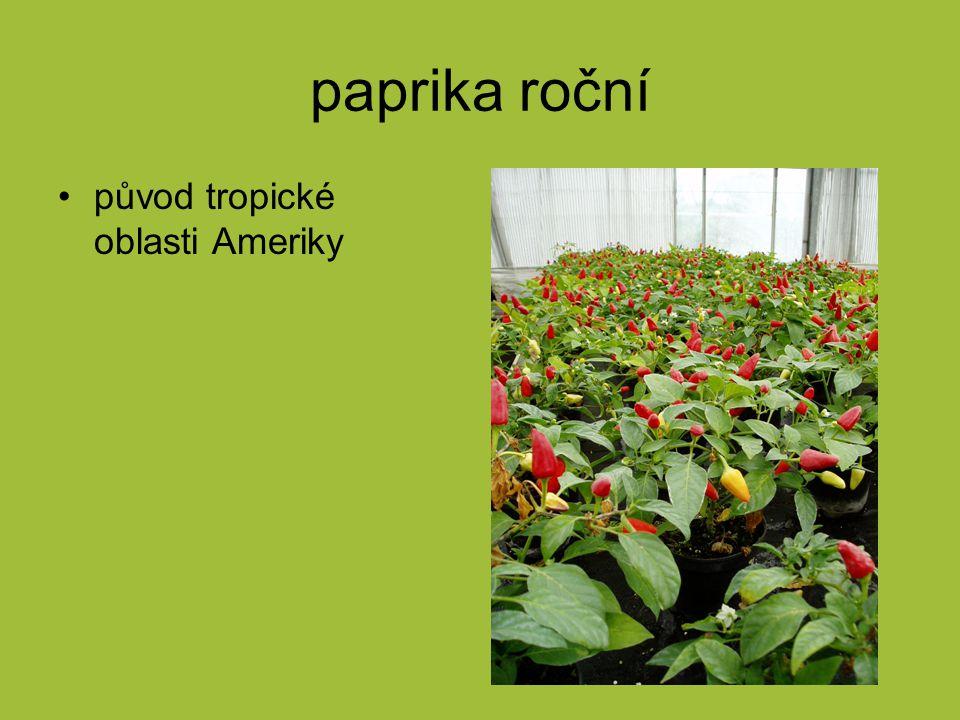 paprika roční původ tropické oblasti Ameriky
