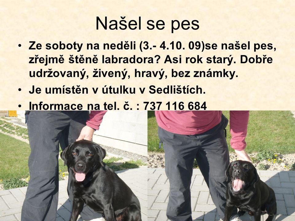 Našel se pes Ze soboty na neděli (3.- 4.10. 09)se našel pes, zřejmě štěně labradora Asi rok starý. Dobře udržovaný, živený, hravý, bez známky.