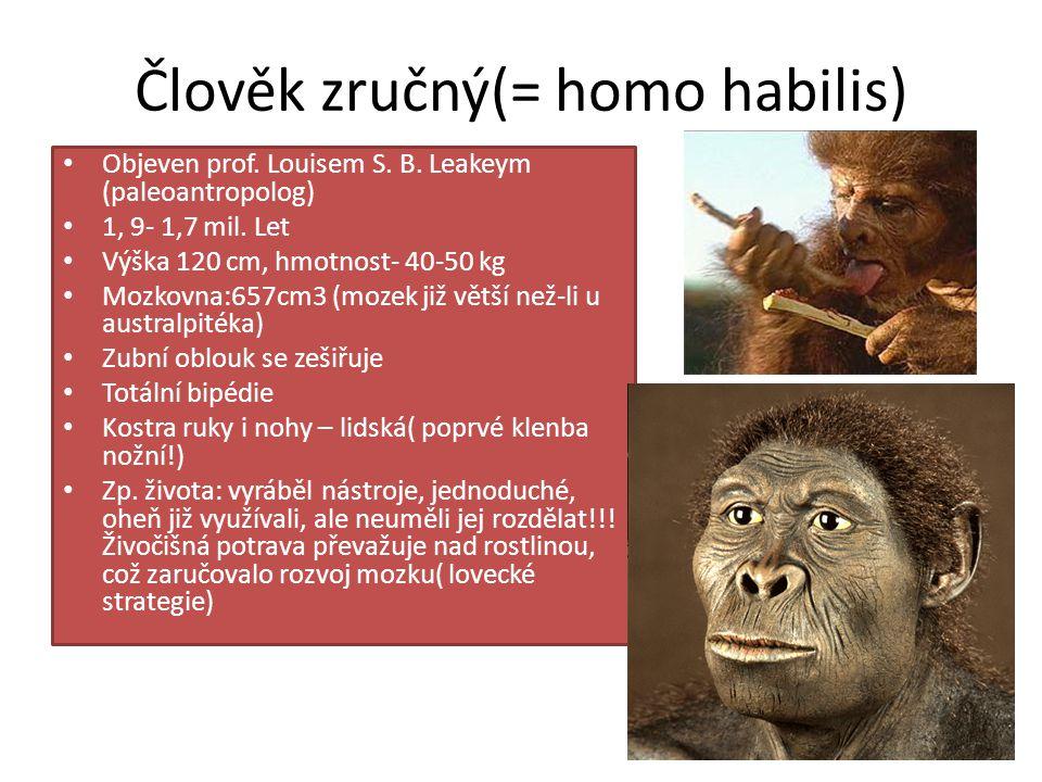 Člověk zručný(= homo habilis)