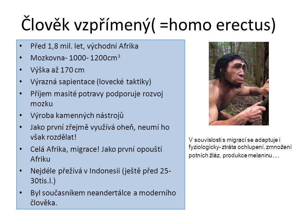 Člověk vzpřímený( =homo erectus)