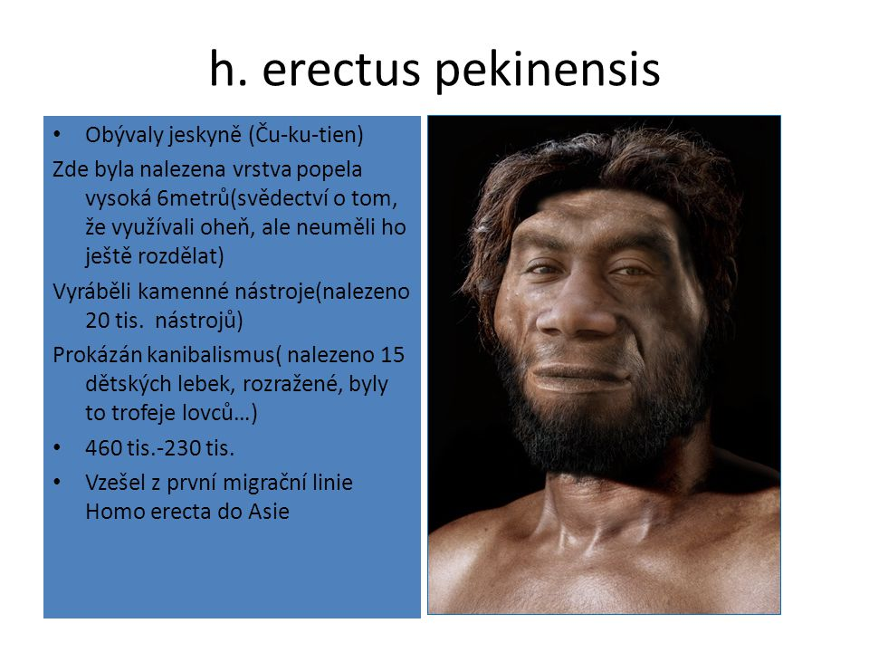 h. erectus pekinensis Obývaly jeskyně (Ču-ku-tien)