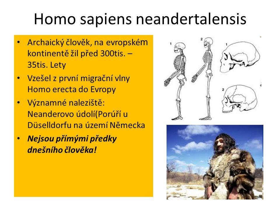 Homo sapiens neandertalensis