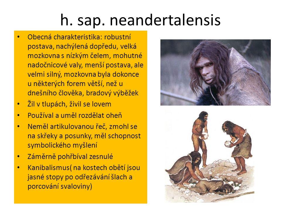 h. sap. neandertalensis