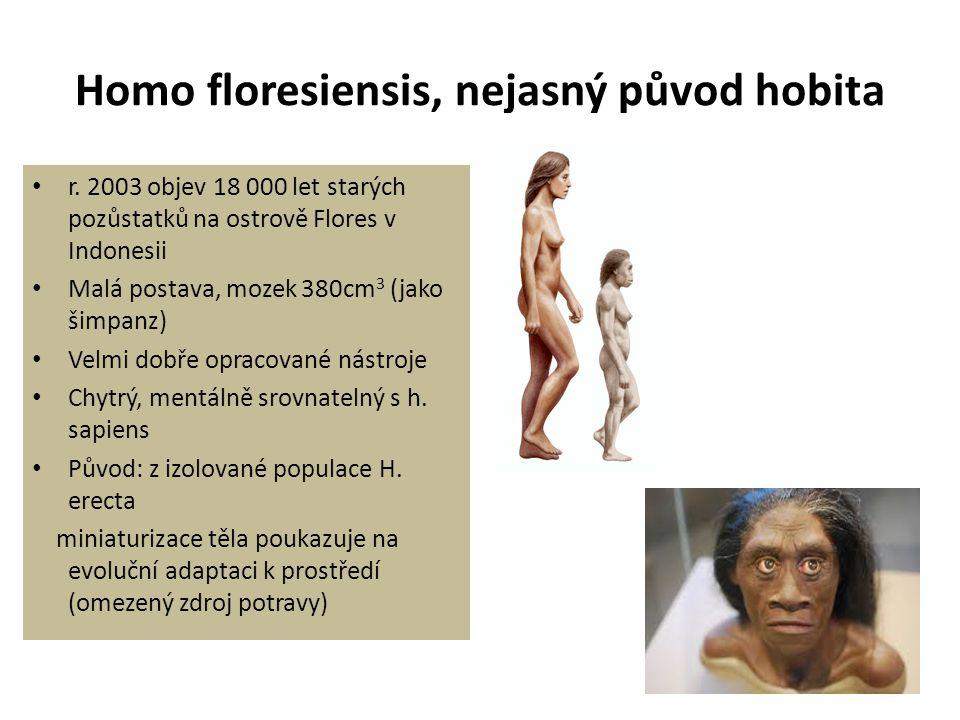 Homo floresiensis, nejasný původ hobita