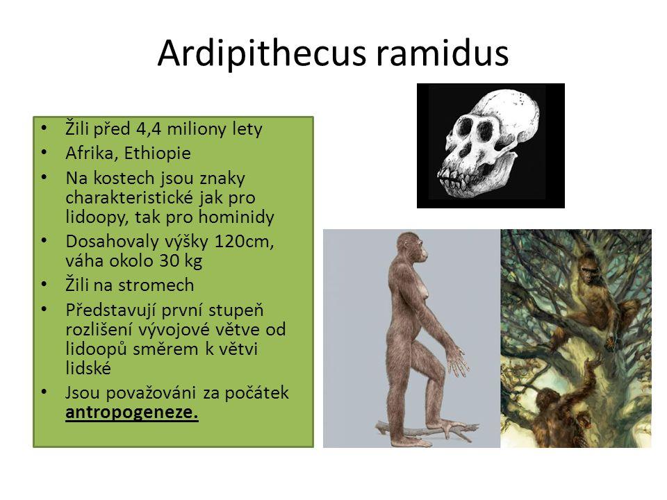 Ardipithecus ramidus Žili před 4,4 miliony lety Afrika, Ethiopie