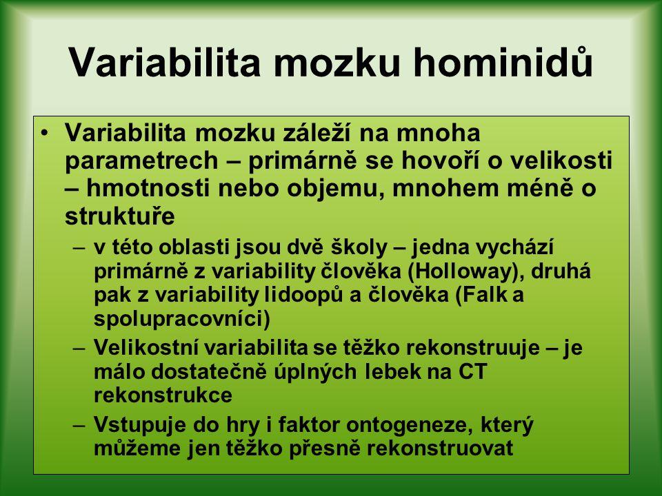 Variabilita mozku hominidů