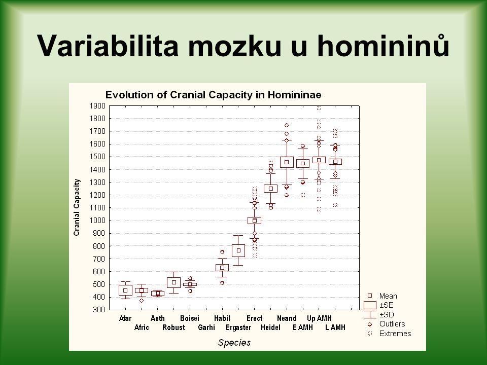 Variabilita mozku u homininů