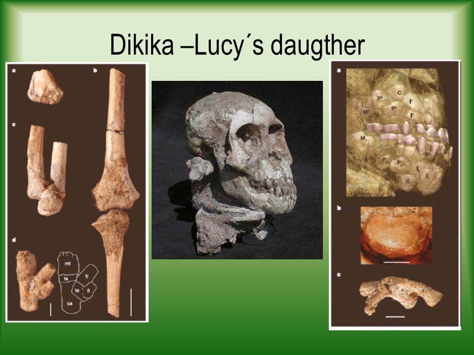 Dikika –Lucy´s daugther