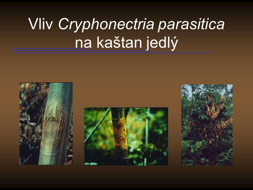Vliv Cryphonectria parasitica na kaštan jedlý