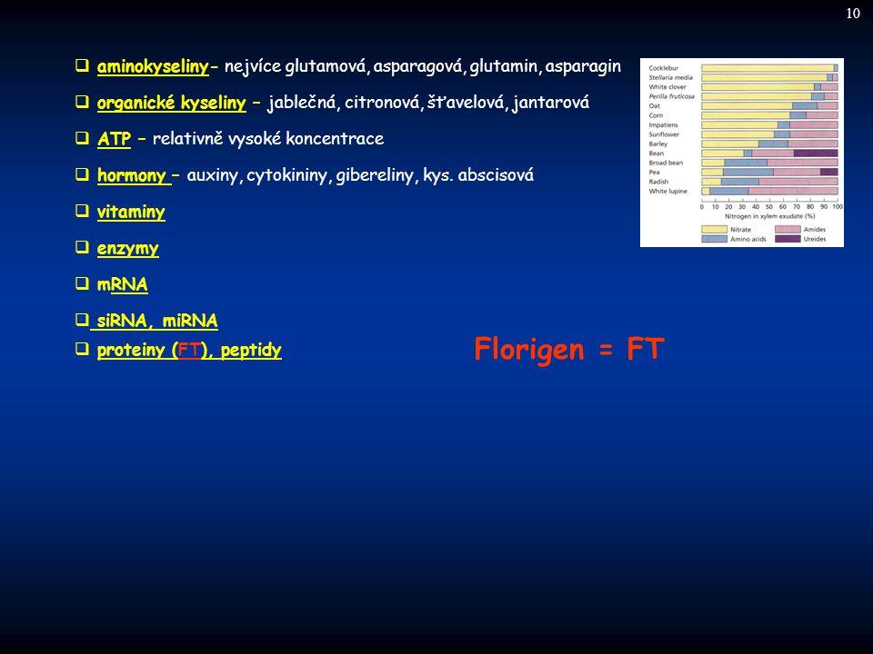 10 aminokyseliny- nejvíce glutamová, asparagová, glutamin, asparagin. organické kyseliny – jablečná, citronová, šťavelová, jantarová.