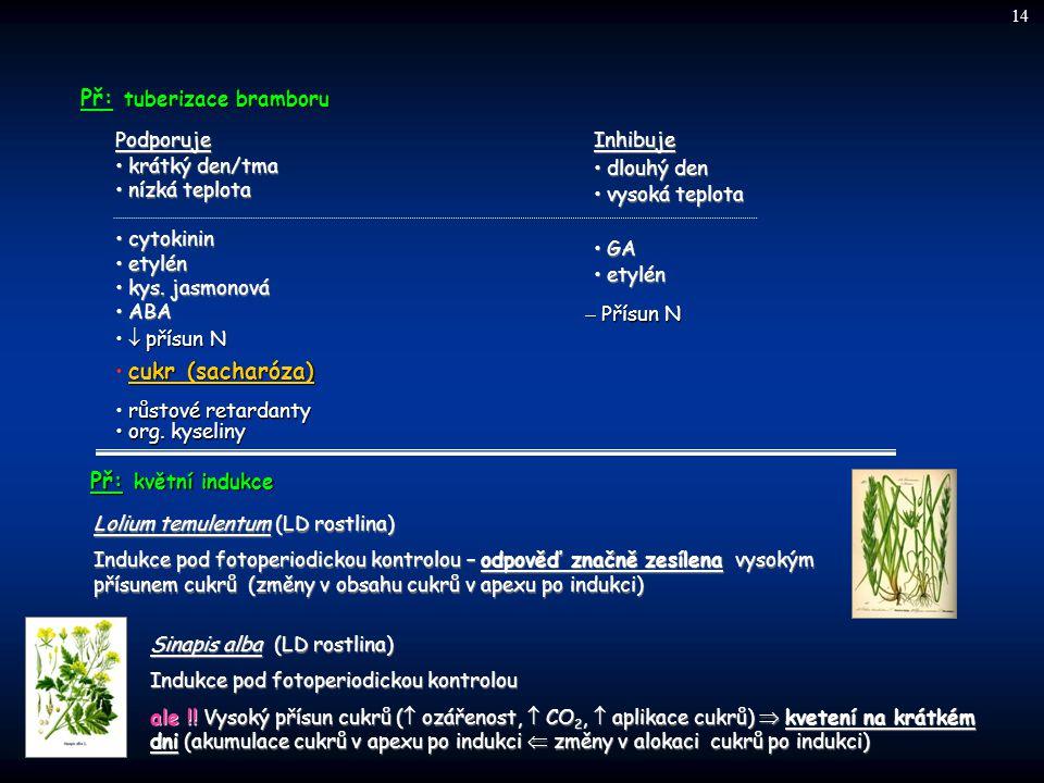 Př: tuberizace bramboru