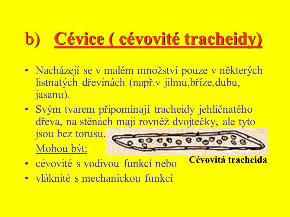 b) Cévice ( cévovité tracheidy)