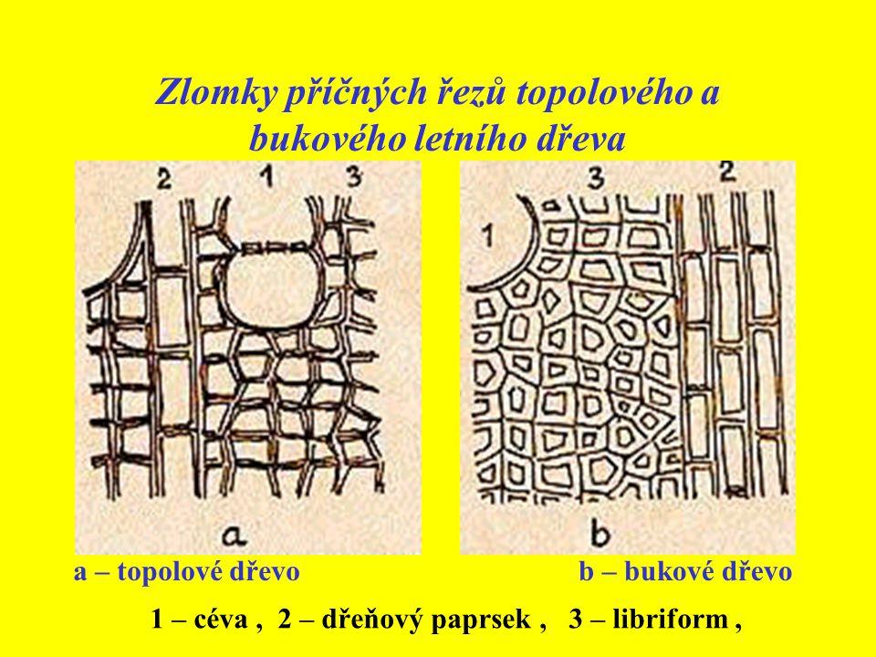 Zlomky příčných řezů topolového a bukového letního dřeva