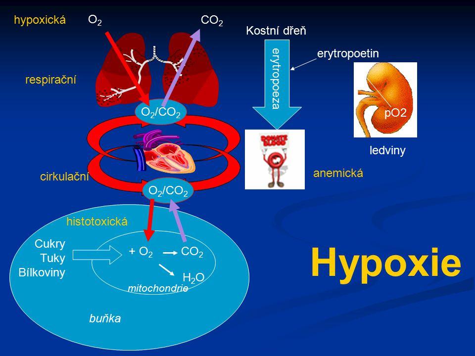 Hypoxie hypoxická O2 CO2 pO2 ledviny erytropoetin Kostní dřeň
