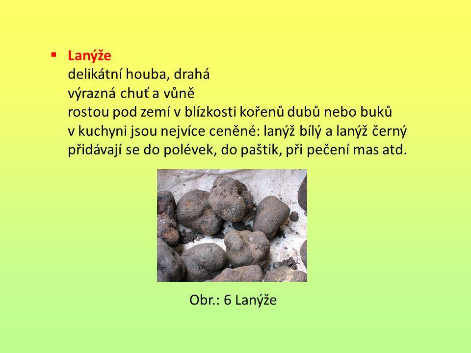Lanýže delikátní houba, drahá. výrazná chuť a vůně. rostou pod zemí v blízkosti kořenů dubů nebo buků.