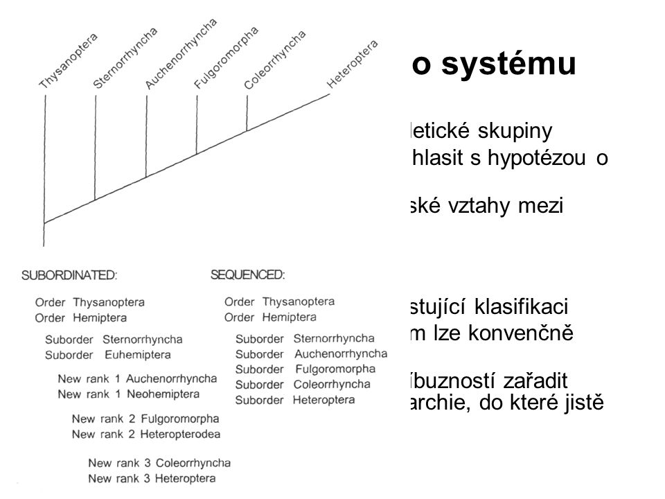 Převod fylogeneze do systému