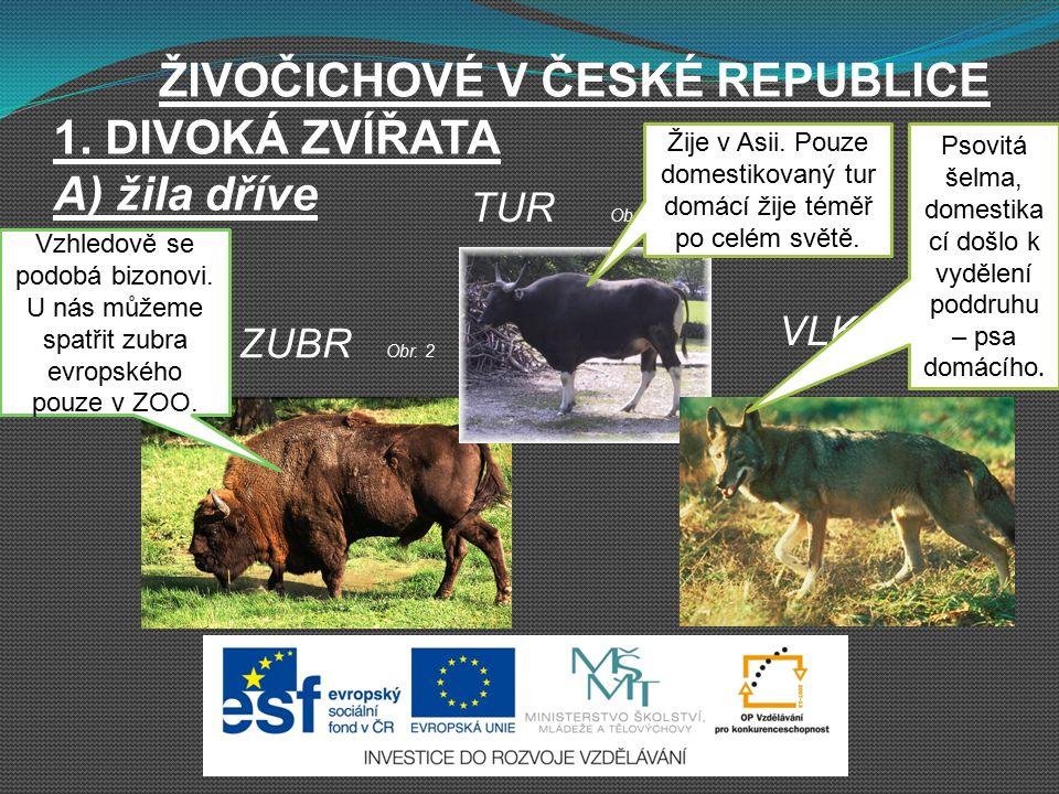 ŽIVOČICHOVÉ V ČESKÉ REPUBLICE 1. DIVOKÁ ZVÍŘATA A) žila dříve