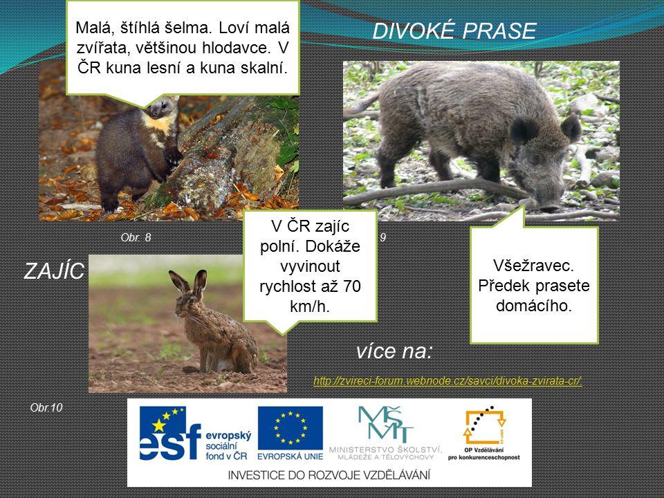 více na: http://zvireci-forum.webnode.cz/savci/divoka-zvirata-cr/: